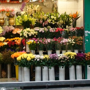 At the Florist's