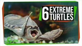 Mouth-Peeing and 5 Other Extreme Turtle Traits