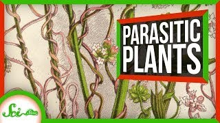 This Parasitic Plant Stole Over 100 Genes From Other Plants | SciShow News