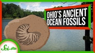 How to Find Thousands of Oceanic Fossils in... Ohio?